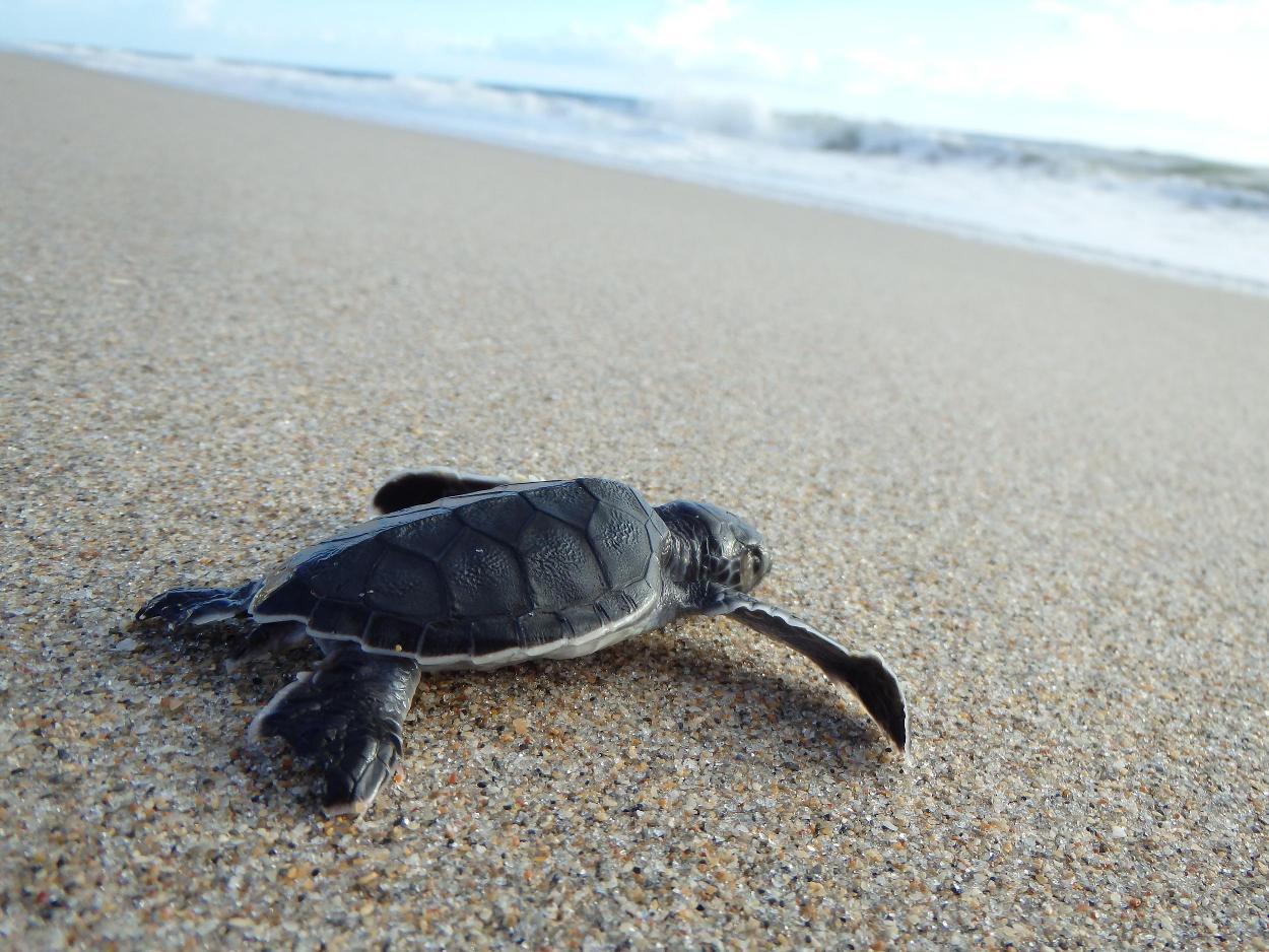 green_turtle_1250_938